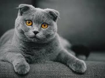 Renting out without online payment: Scottish Fold
