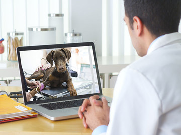 Veterinarian: Telehealth
