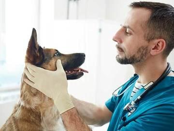 Veterinarian: Dr. Sandeep Yadav