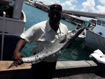 Sell: Fresh Barracuda