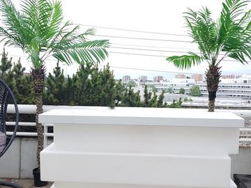 Uthyres: Palmträd