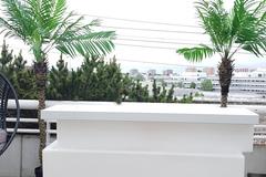Övrig bokningstyper: Palmträd