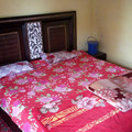 Renting out: Live in nature HOMESTAY IN KUFRI - SHIMLA, INDIA