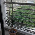 Renting out: HOMESTAY IN SECTOR 11, KOPARKHAIRANE - NAVI MUMBAI