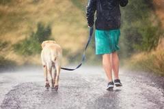 Offering: Dog walker