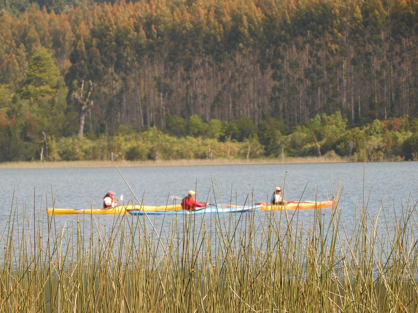 Kayak de medio día en Laguna Escondida