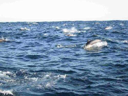 Whale Watching for Beginners and Individuals