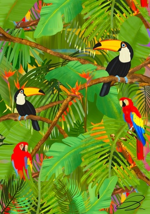 Selling: Birds of Paradise