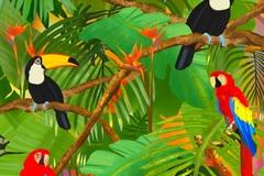 Birds of Paradise