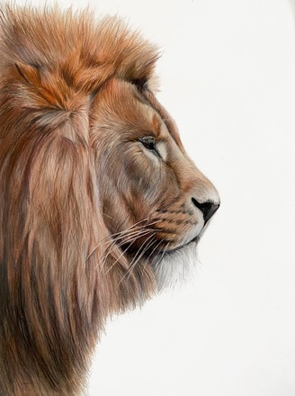 Selling: Lion king
