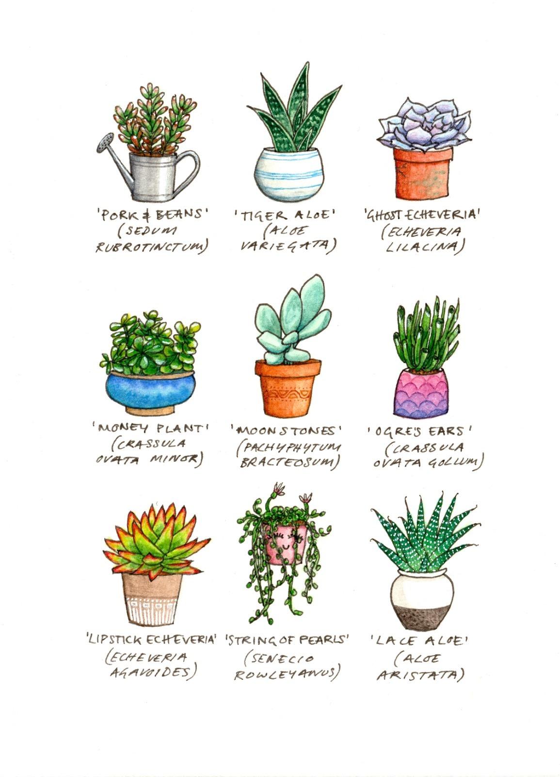 'Succulents' Greetings Card