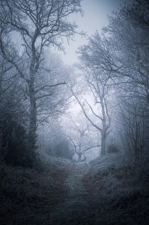 Selling: Forest Moody Trees