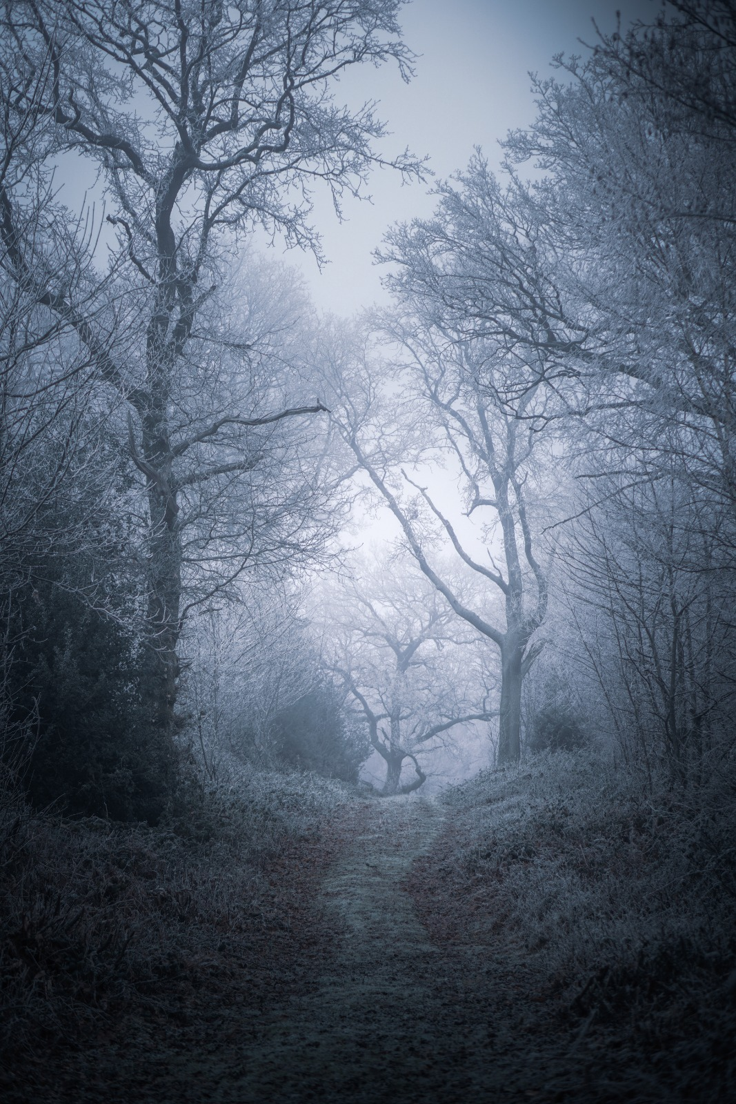 Forest Moody Trees