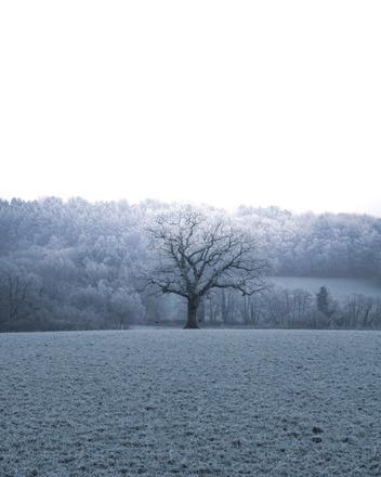 Selling: Frosty Lone Tree