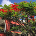 Pre-reserva de hoteles: Árbol de Fuego Eco - Hotel
