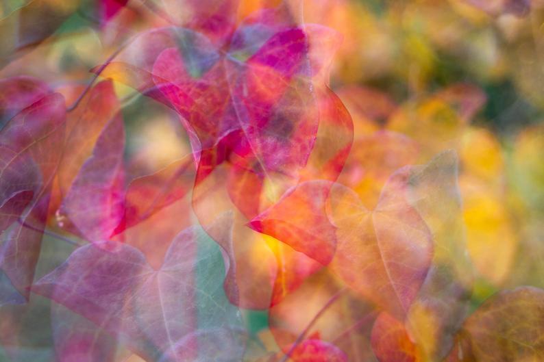 Cercis - Abstract A3 Fine Art Print