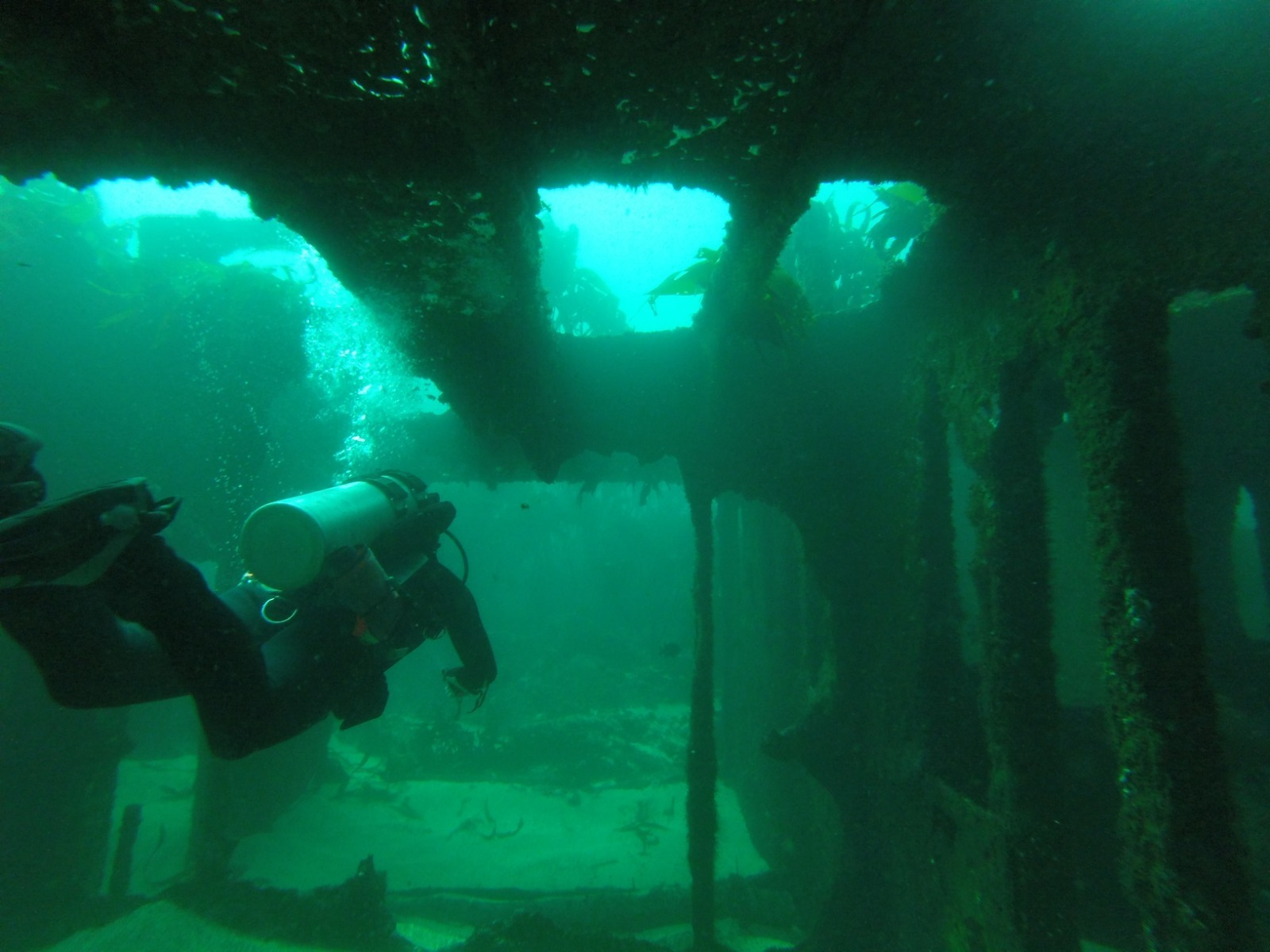 Buceo doble guiado en Quintay (naufragios y más)