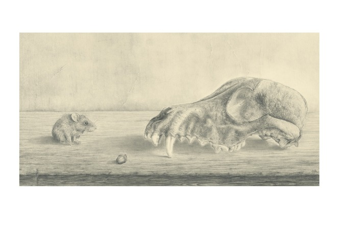 The Fox skull, the mouse and his prey