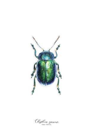 Selling: CHRYSOLINA (A5)