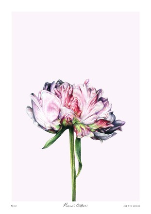 Selling: PAEONIA (A4)