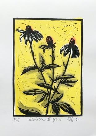 Echinacea 3 Yellow