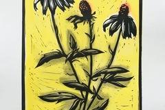 Selling: Echinacea 3 Yellow
