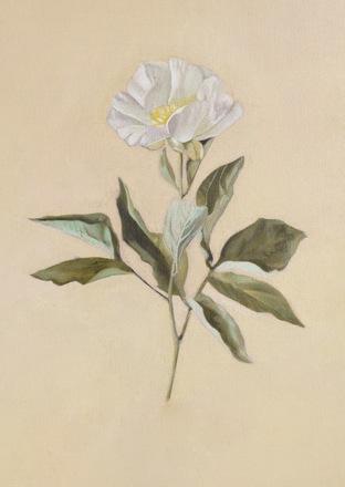 Selling: Rose Print