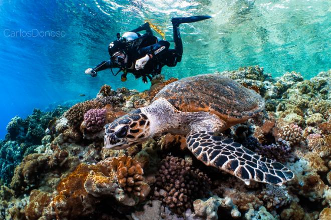 Expedición de Buceo en el Mar Rojo Norte -Ruta pecios y arrecifes