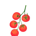 Selling: Vine tomatoes