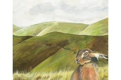 Selling: Hare Waiting