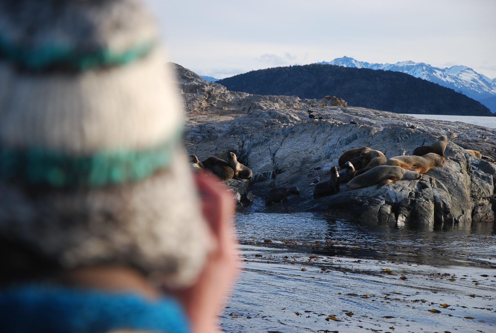 Kayak Beagle avistamiento de lobos marinos