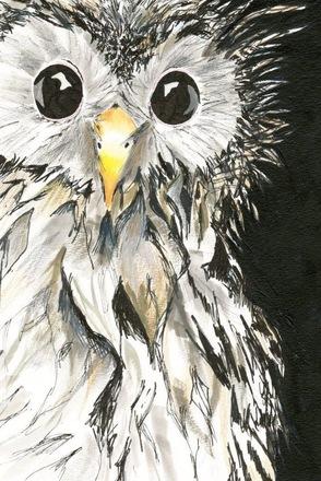 Selling: 'Curious Bird'