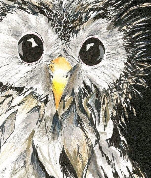 'Curious Bird'