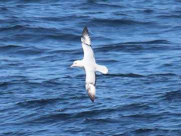 Experiencia: Avistamiento de Fauna Marina en la Bahía de Antofagasta