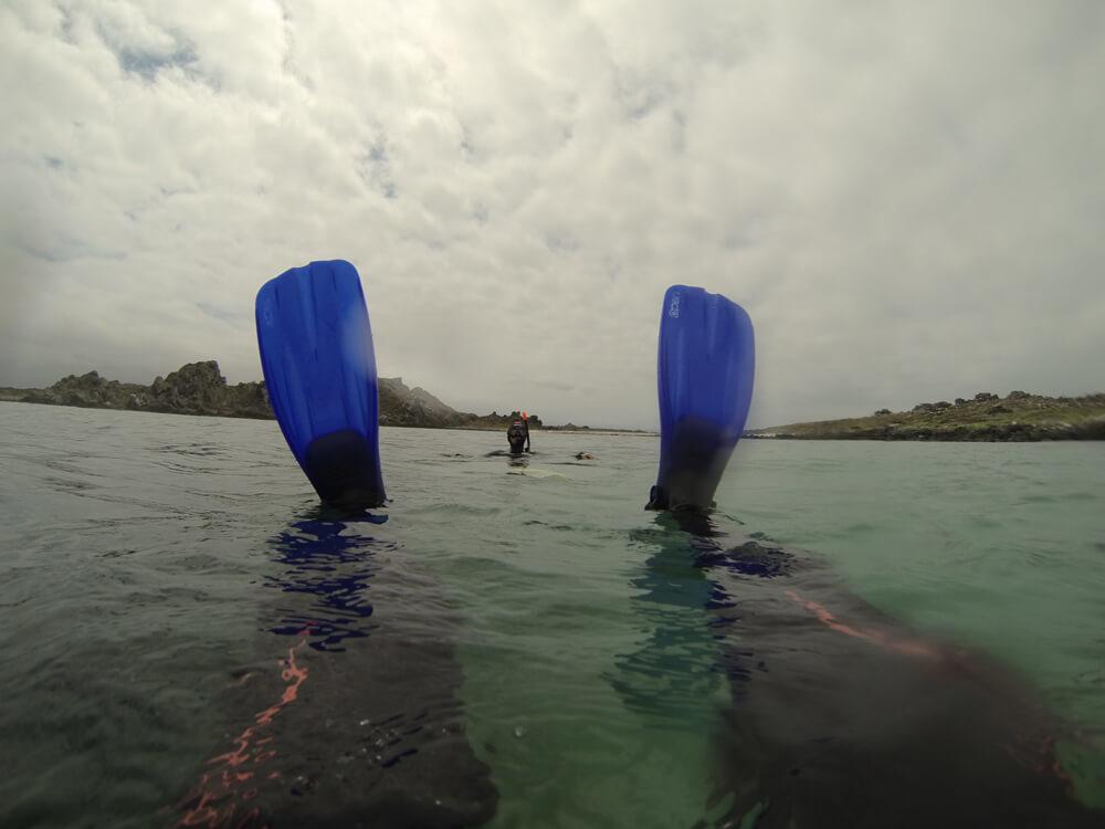 Snorkeling Guiado en Punta de Choros