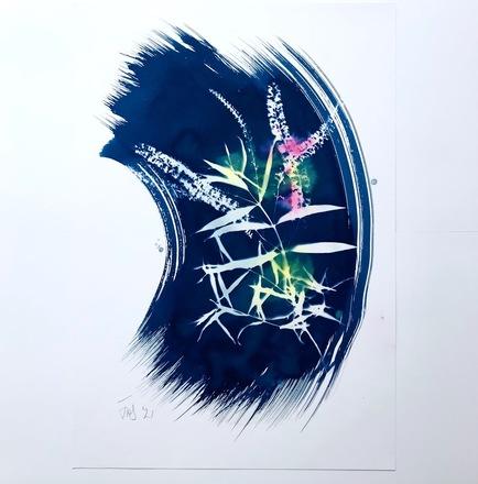 Cyanotype with shrub 12