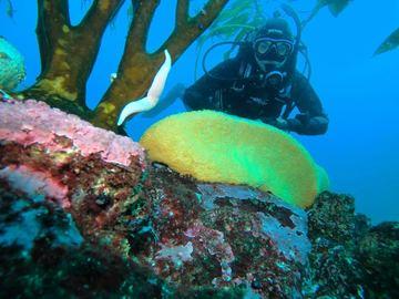Curso: Curso PADI Open Water Diver en Antofagasta