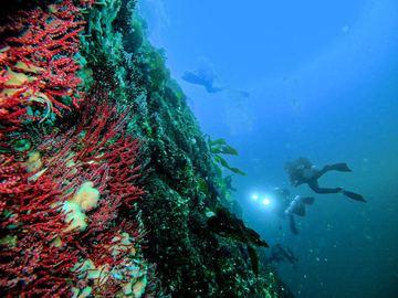 Curso: Curso de Buceo PADI Advanced Open Water Diver en Antofagasta