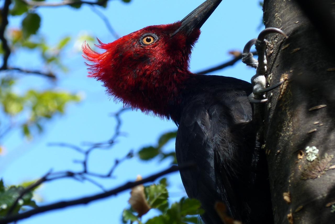 Avistamiento de Aves en río Liucura, Pucón