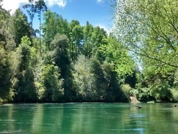 Experiencia: Flotada Familiar en el Río Licura, Pucón