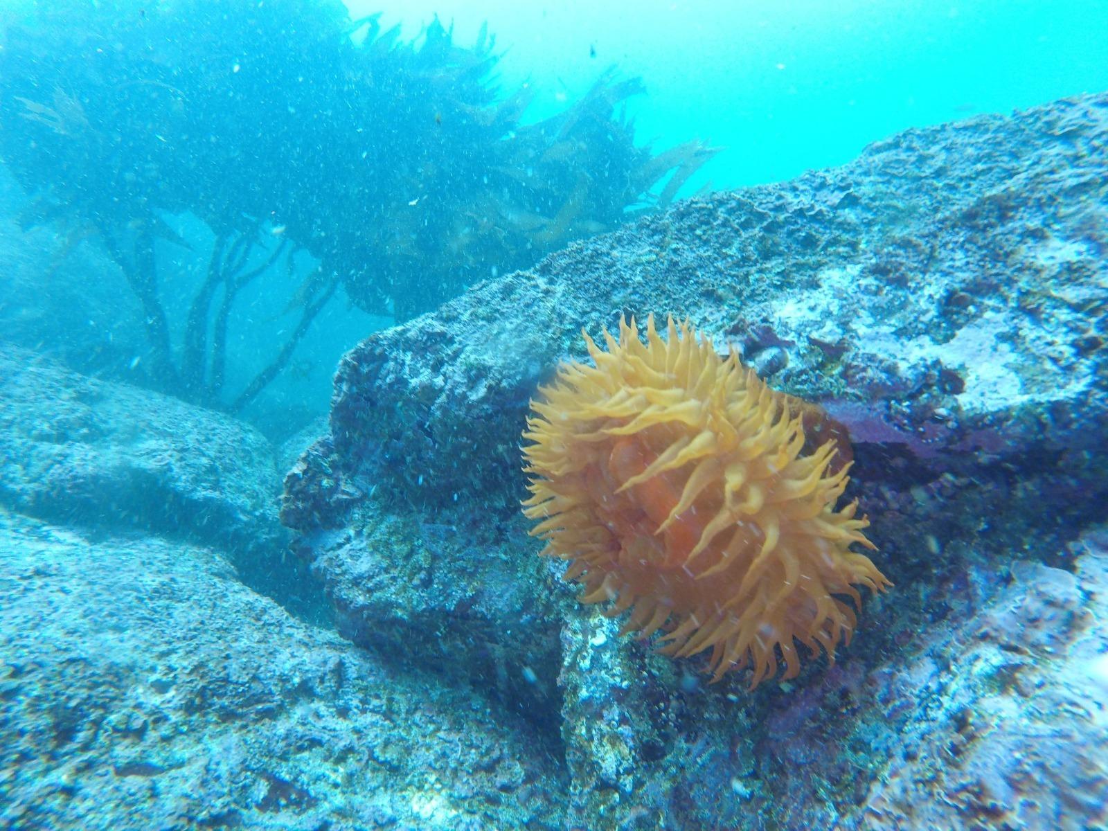 Curso PADI Open Water Diver en Quintay