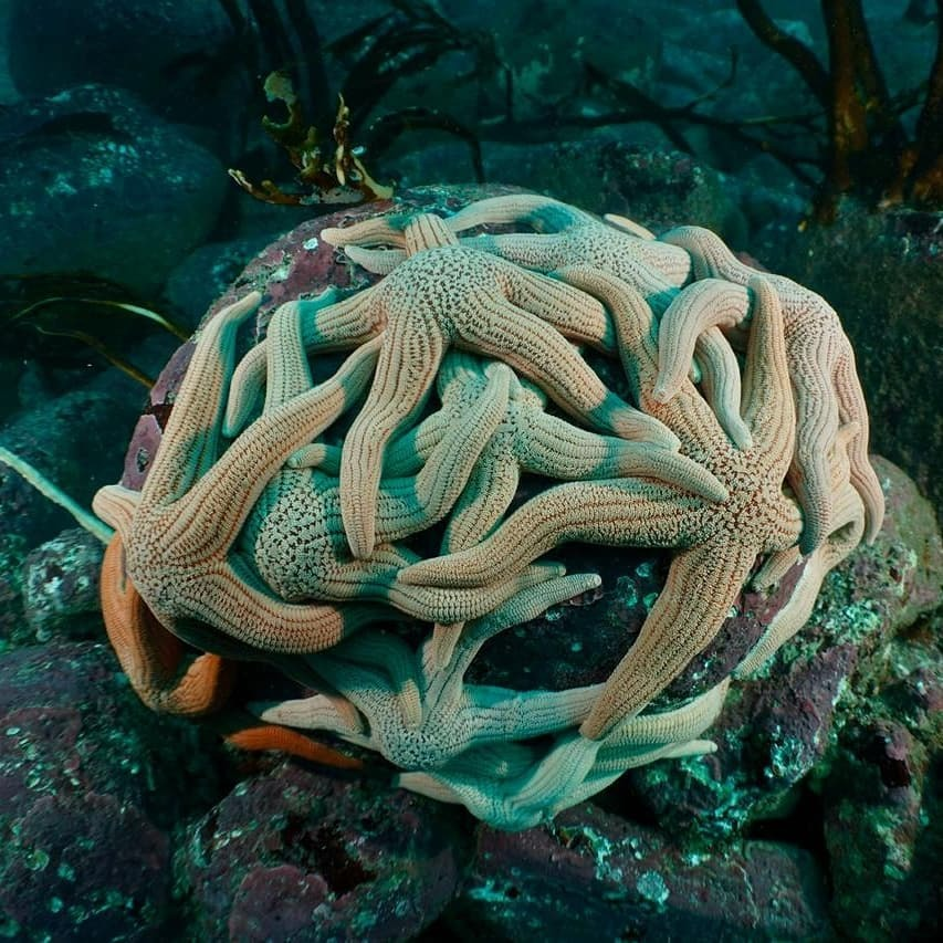 Curso PADI Open Water Diver en Pichidangui