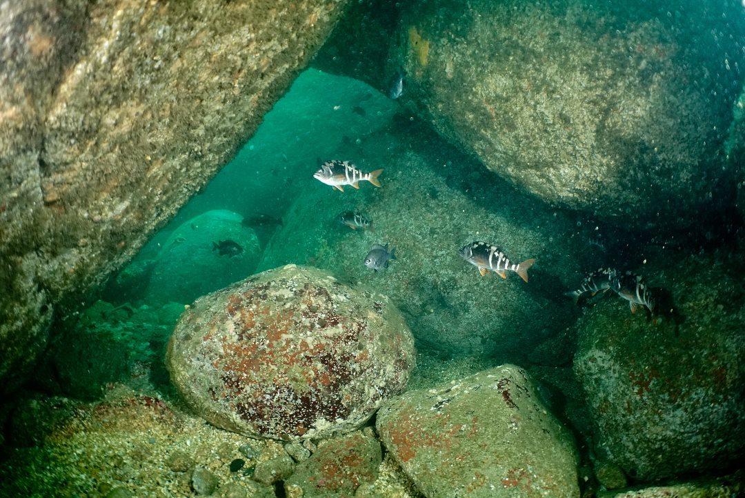 Buceo Doble Guiado en Pichidangui