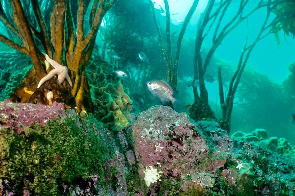 Curso PADI Buzo Submarino Naturalista en Algarrobo