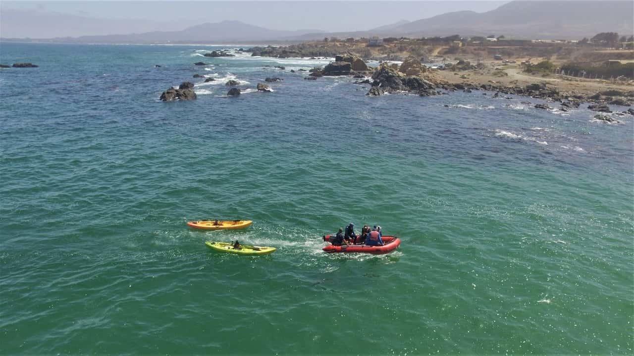 Avistamiento en Bote por Concón y Mantagua