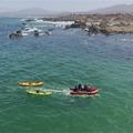 Experiencia: Avistamiento en Bote por Concón y Mantagua