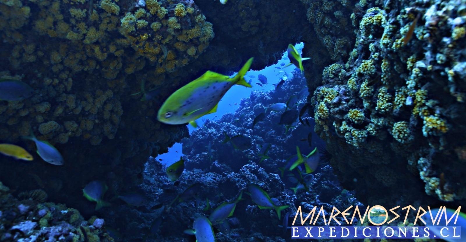 Curso Conservación de Corales PADI en Juan Fernández