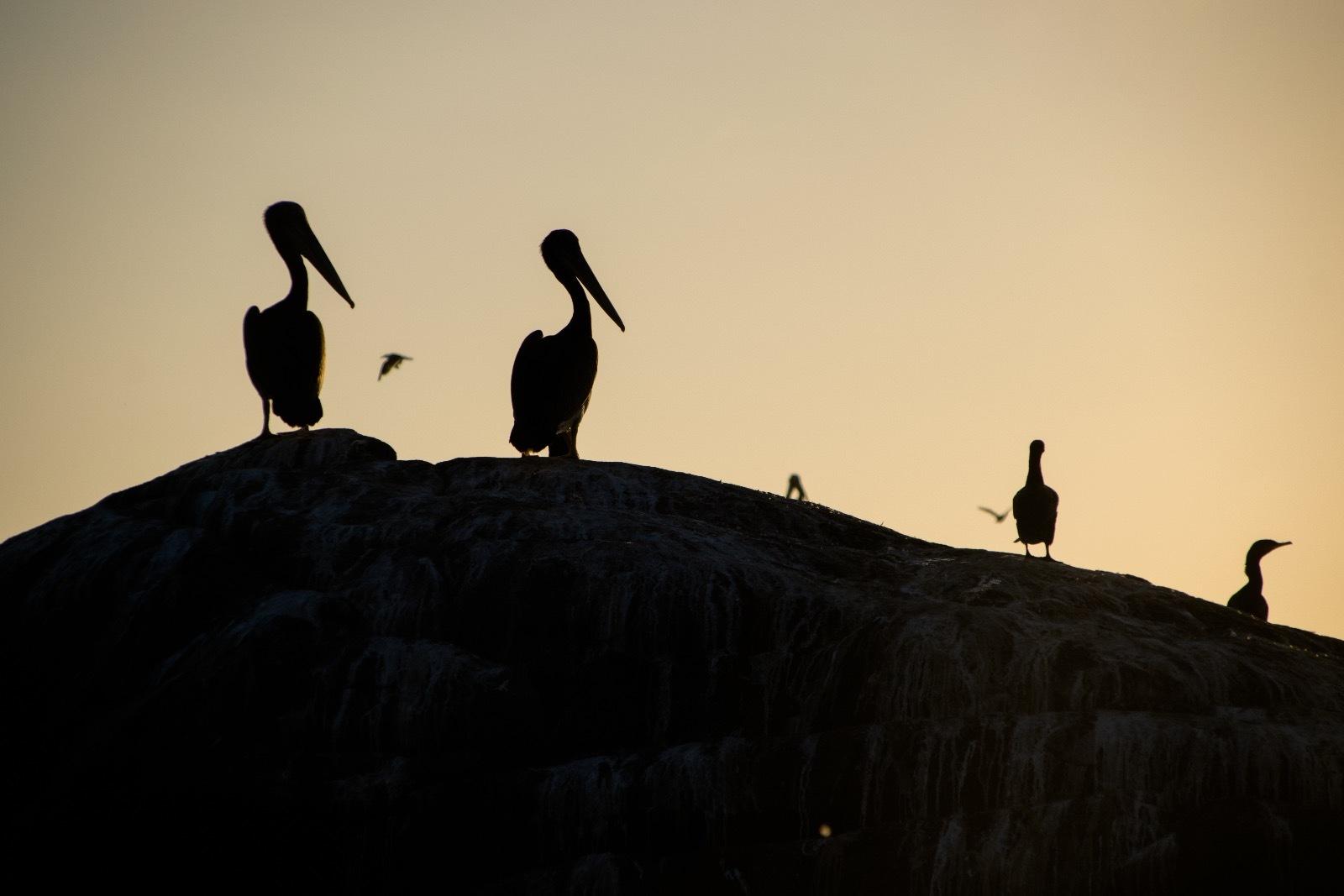 Birdwatching & Sunset Zapallar