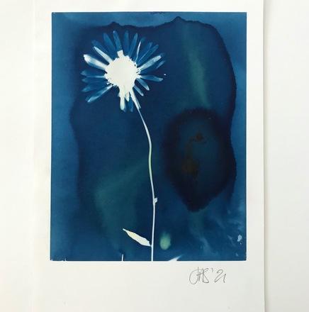 Cyanotype with daisy 17