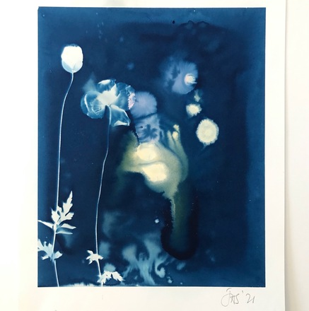 Cyanotype with poppies 14